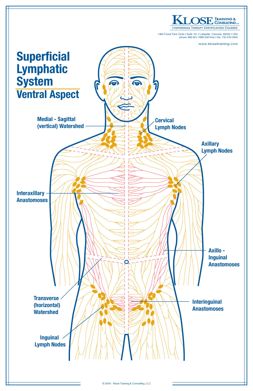 medium resolution of diagram of massage