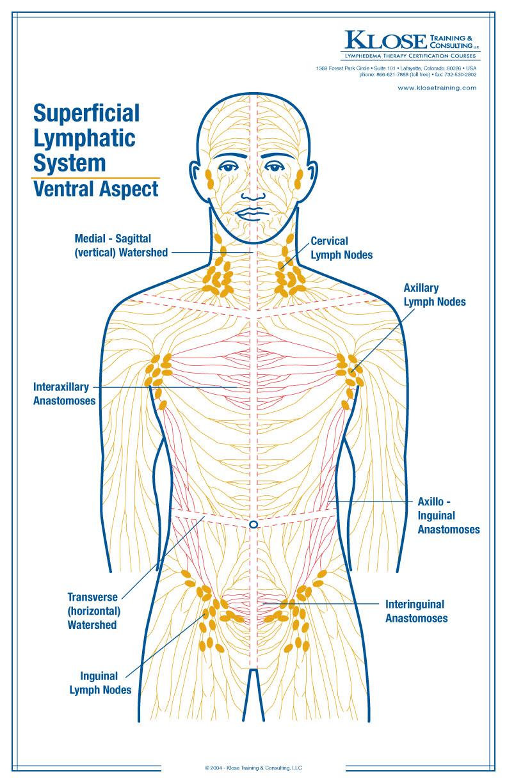 hight resolution of diagram of massage