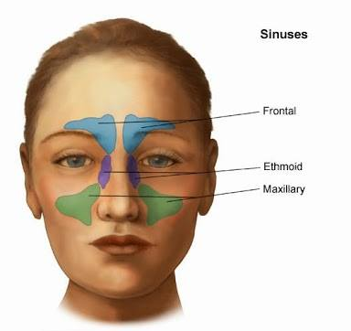 head ears eyes nose throat physical Heent (head ears eyes nose throat) online peta home view entire video primary exam inspection palpation temporomandibular joint superficial lymph nodes thyroid gland.