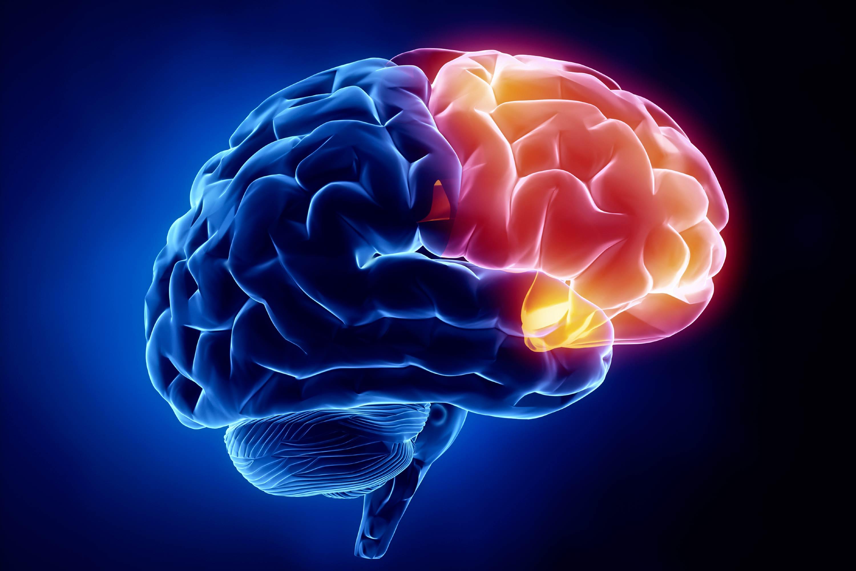 Guide To The Neurology Shelf – Stepwards