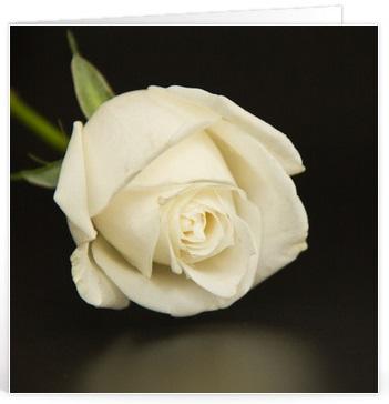 Sterkte wensen crematie (10)