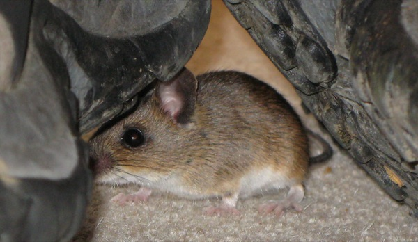 mouse-scaled.JPG