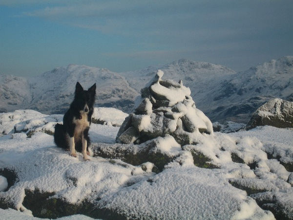 Pippa on Green Crag with Sca Fell Pike and Esk Pike behind