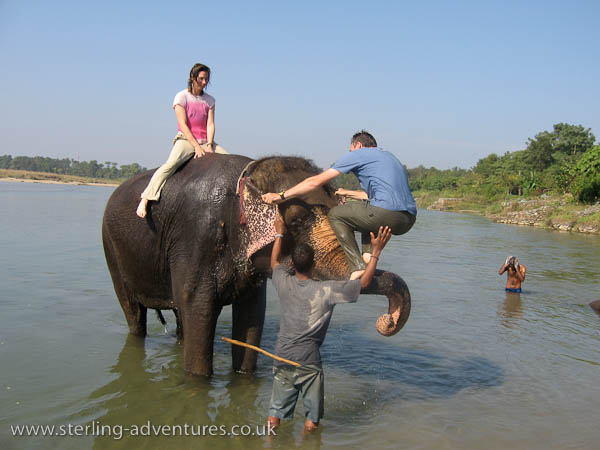 "Elephant ""Bouldering"", Chitwan National Park"