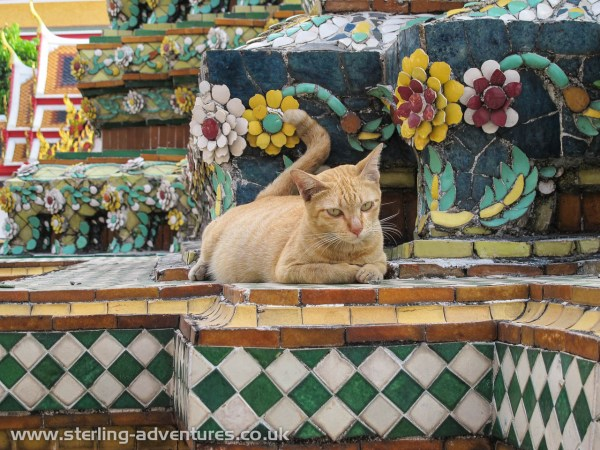 It seems there always has to be at least one cat shot (pity that isn't literal) in every travel post...