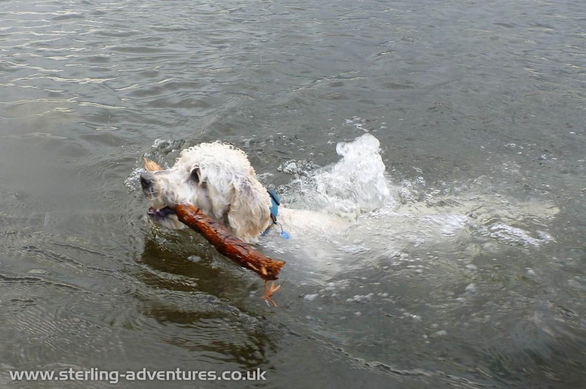 Coniston & Zac's First Swim