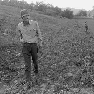 Photo of Wendell Berry walking on a farm in Henry County, KY