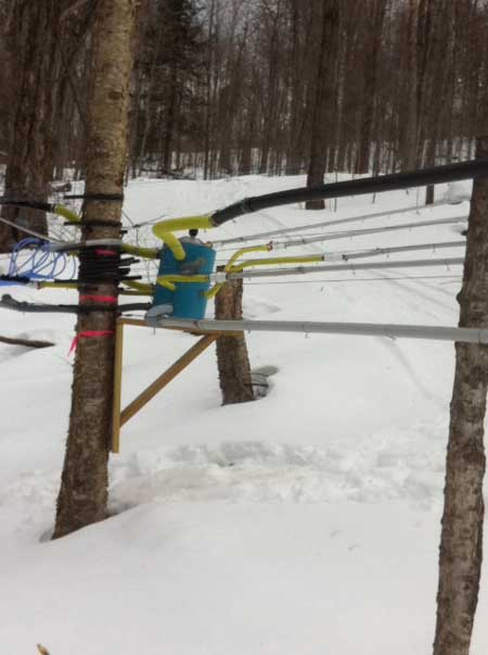 Read more about the article Vermont Maple Syrup on the Brain