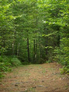 Vermont Nature Trails