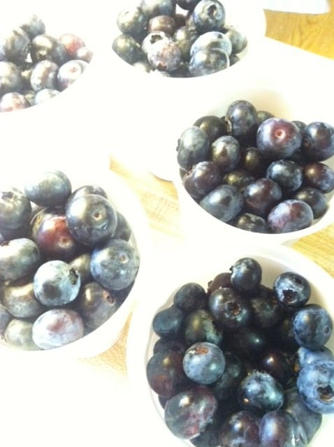 Read more about the article Blueberries, Raspberries, Blackberries… OH MY!