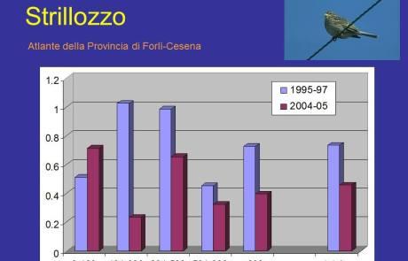 Trend Strillozzo