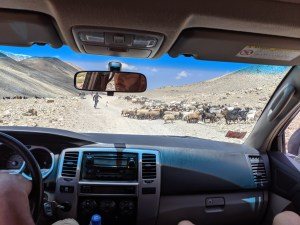 Herd of animals on the road