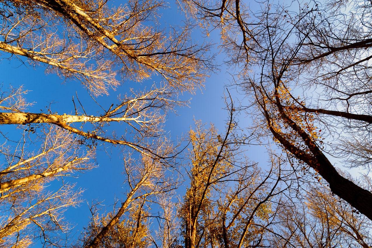 Autumn Canopy, Kittitas County, Washington, 2013