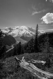 A black and white landcape photograph of Mount Rainier and the White River Valley as viewed from the Silver Forest Trail in the Sunrise area of Mount Rainier National Park, Washington.