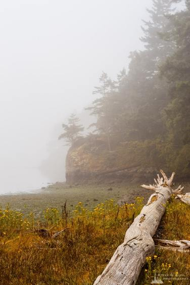 A landscape photograph of Lottie Bay at low tide on a foggy summer morning at Deception Pass State Park, Washington.