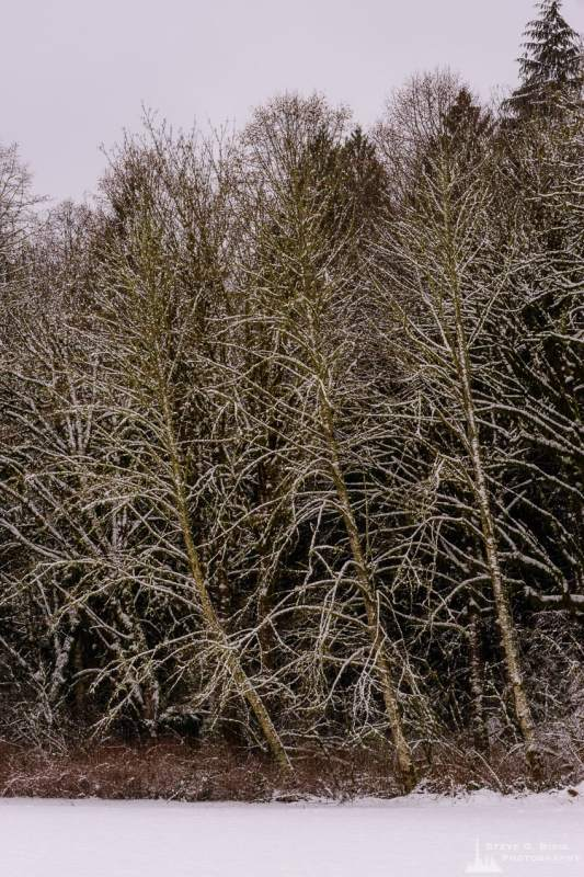 A landscape photograph of trees along the edge of a meadow after a late autumn snowfall at Rasar State Park, in Skagit County near Hamilton, Washington.