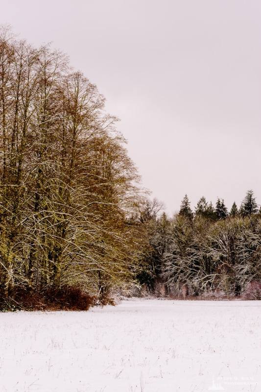 A landscape photograph of the deciduous forest along the edge of a meadow after a late autumn snowfall at Rasar State Park, in Skagit County near Hamilton, Washington.