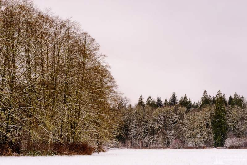 A landscape photograph of a snow covered forest along the edge of a meadow at Rasar State Park, in Skagit County near Hamilton, Washington.