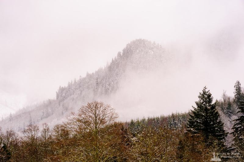 A landscape photograph of a snow covered misty hillside as viewed from Rasar State Park, in Skagit County near Hamilton, Washington.