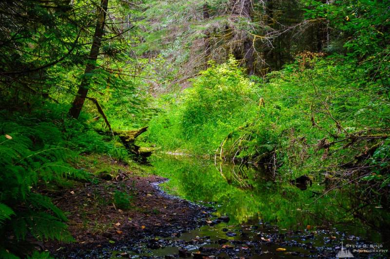 A nature photograph of Woods Creek during the summer in the Gifford Pinchot National Forest near Randle, Washington.