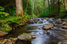 A nature photograph captured along the banks of Skate Creek during late summer in the Gifford Pinchot National Forest in Lewis County, Washington.