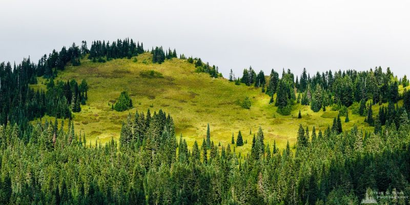A panoramic Pacific Northwest landscape photograph of Lookout Mountain located in the Gifford Pinchot National Forest as viewed from Forest Road 5230 in Lewis County, Washington.