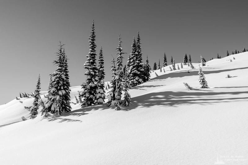A black and white Pacific Northwest landscape photograph of snow-covered alpine trees captured on a sunny winter day in the Paradise area of Mount Rainier National Park, Washington.