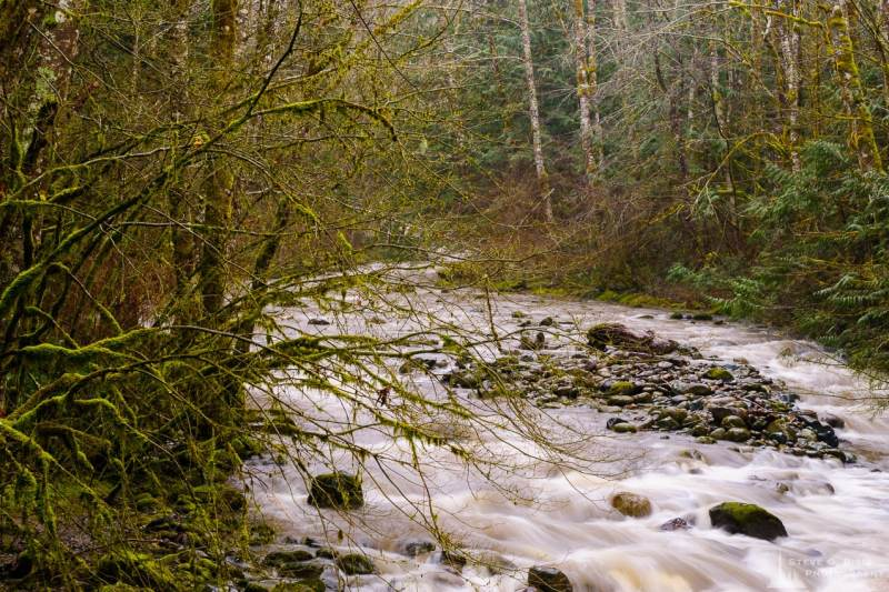 A landscape photograph captured on a rainy winter day along Cumberland Creek in Skagit County, Washington.