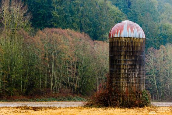 A rural photograph of a old silo on a rainy winter day along the South Skagit Highway in Skagit County, Washington.