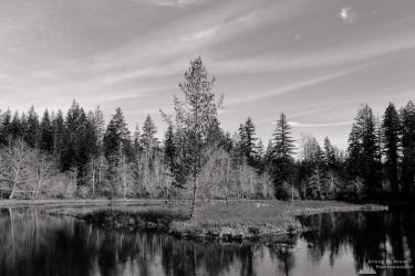 A mid-winter black and white landscape photograph of an island and forested shoreline of Lake West near FR2340 in rural Mason County, Washington.