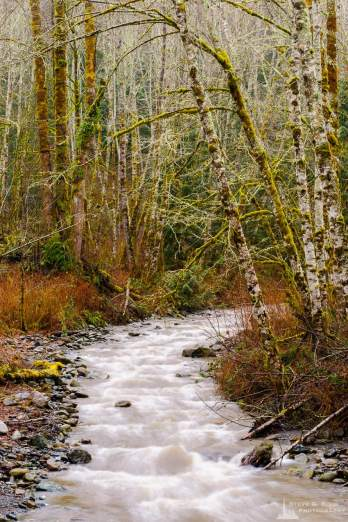 A landscape photograph of Loretta Creek on a rainy winter day along the South Skagit Highway in Skagit County, Washington.
