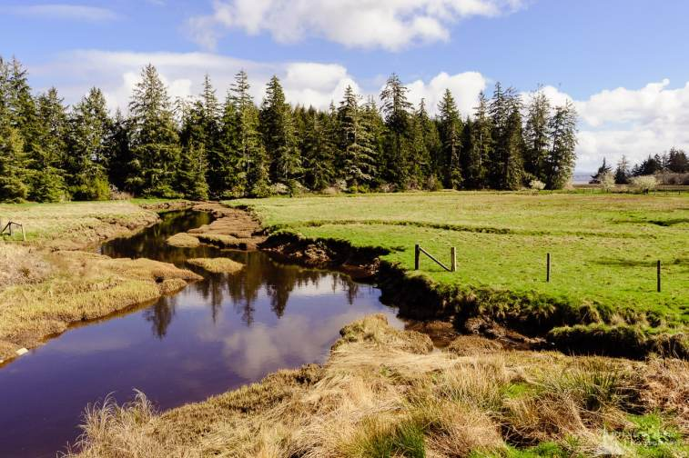 A landscape photograph of Norris Slough along Willipa Bay in rural Pacific County, Washington.