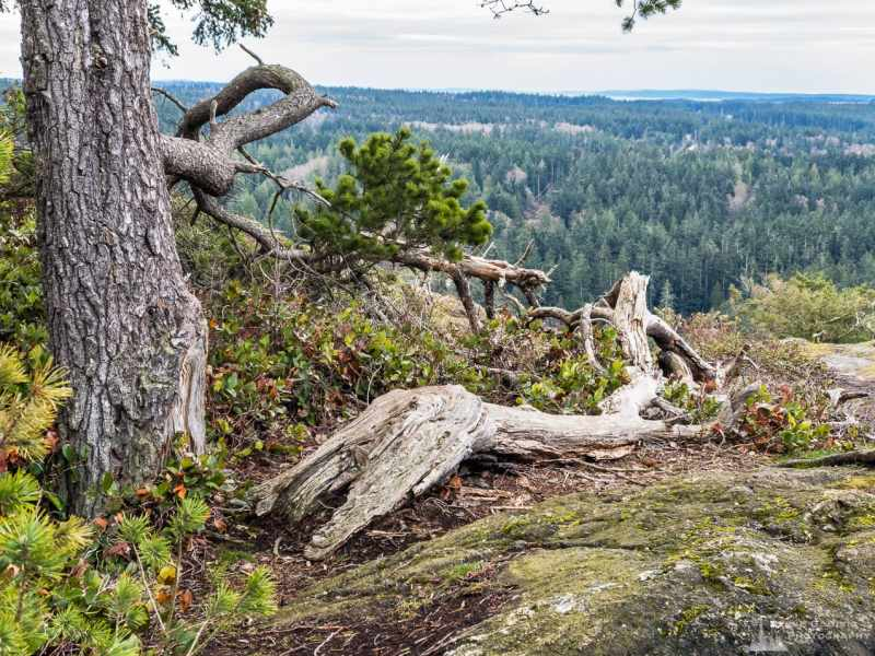 A mobile landscape photograph of an overlook among rocky outcroppings of Goose Rock on Whidbey Island at Deception Pass State Park, Washington.