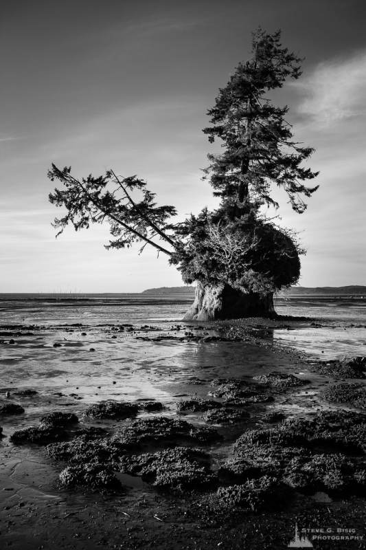 A black and white landscape photograph of Conifer Island at low tide on Willapa Bay, Washington.