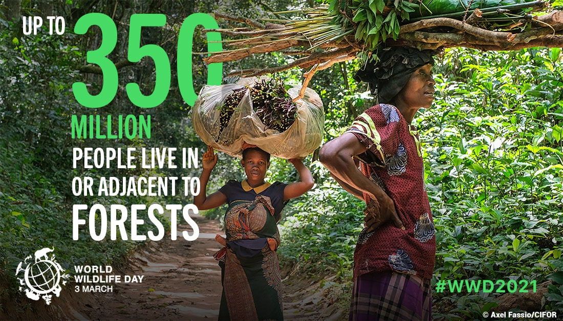 As many as 350 million people live within or adjacent to forested areas around the world. They rely on the ecosystem services provided by forests and forest species to meet their essential needs.