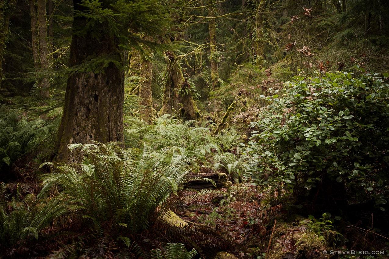Lowland Winter Forest No. 3 Tacoma, Washington, 2015