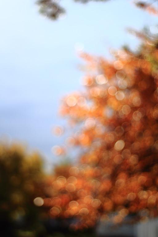Turning Leaves into Bokeh