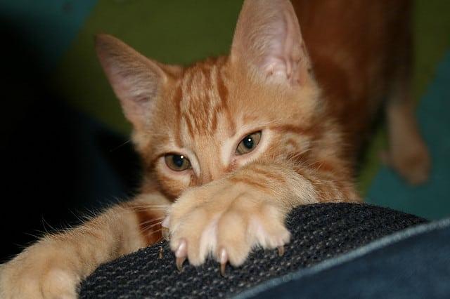 Cat Kuning Untuk Ruang Tamu