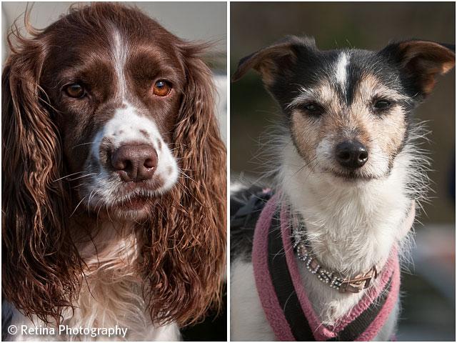 Dog Agility Dog Portraits