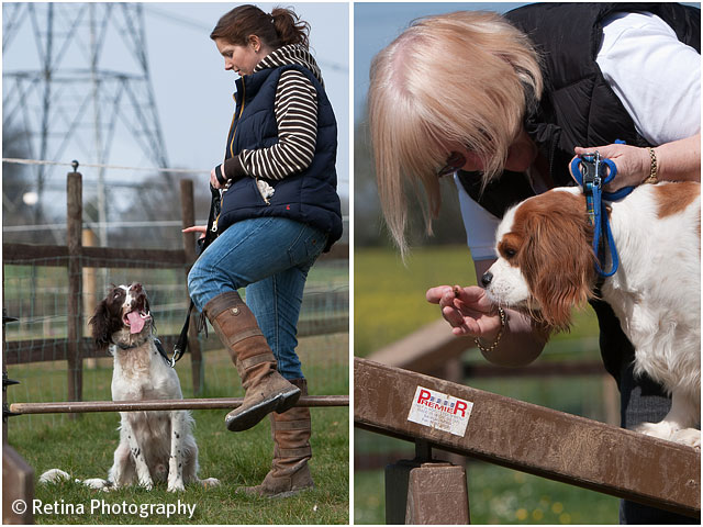 Dog Agility Incentive And Demonstration