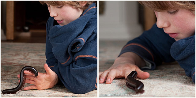 Giant Millipede With Young Boy