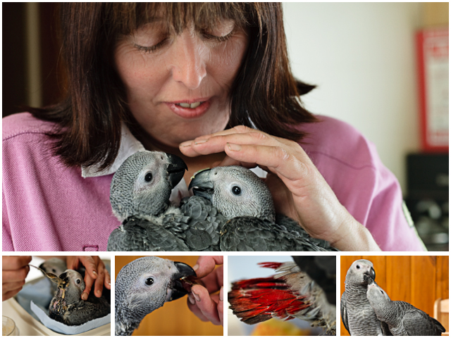 Weekend Passions Hand Reared Parrots Editorial Montage