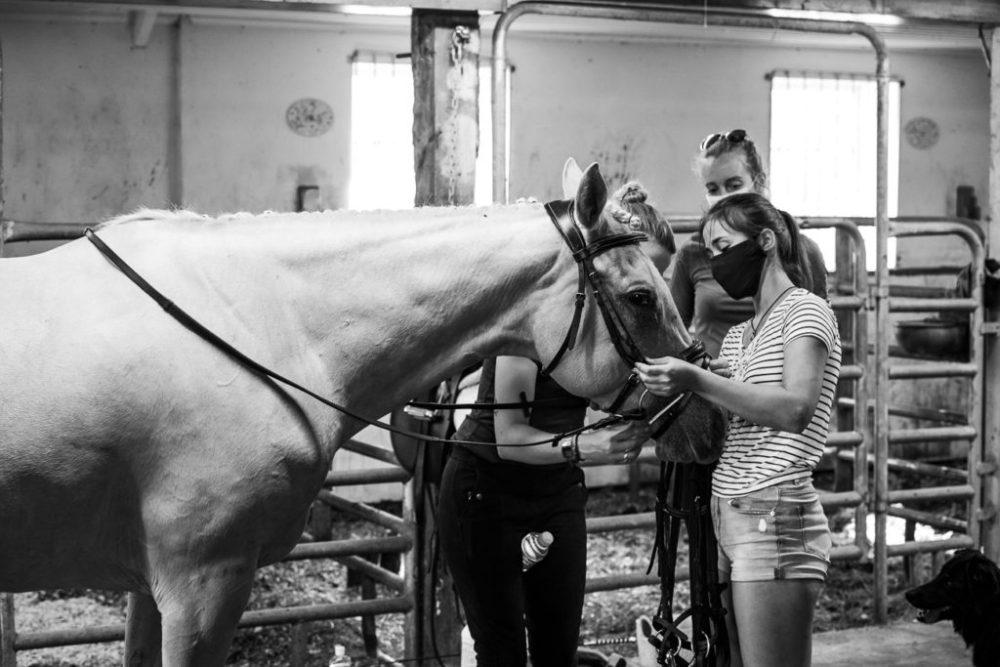 cheval préparation