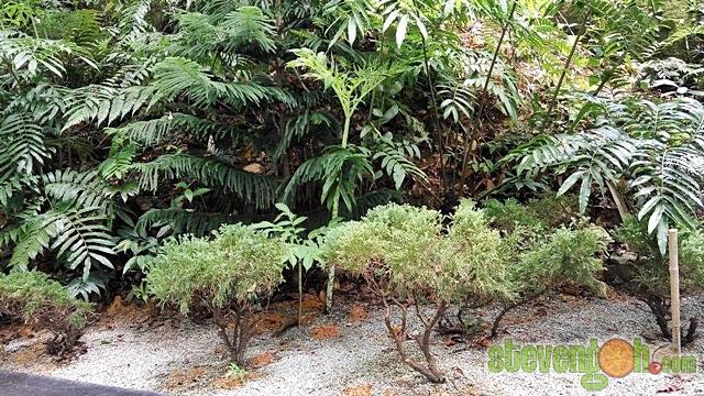 the_habitat_penang_hill22