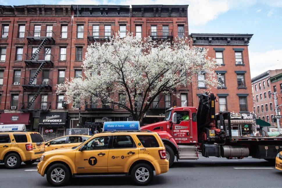 Cherry Blossom in New York City