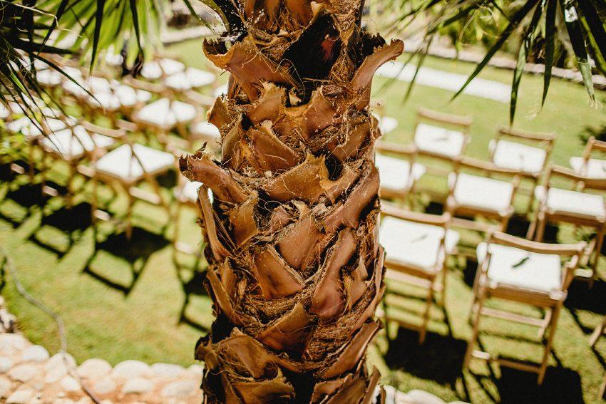 palm tree photograph at the wedding of morgane and doug