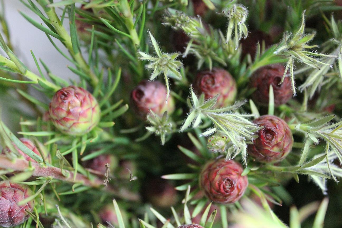 Greens  Stevens and Son Wholesale Florist