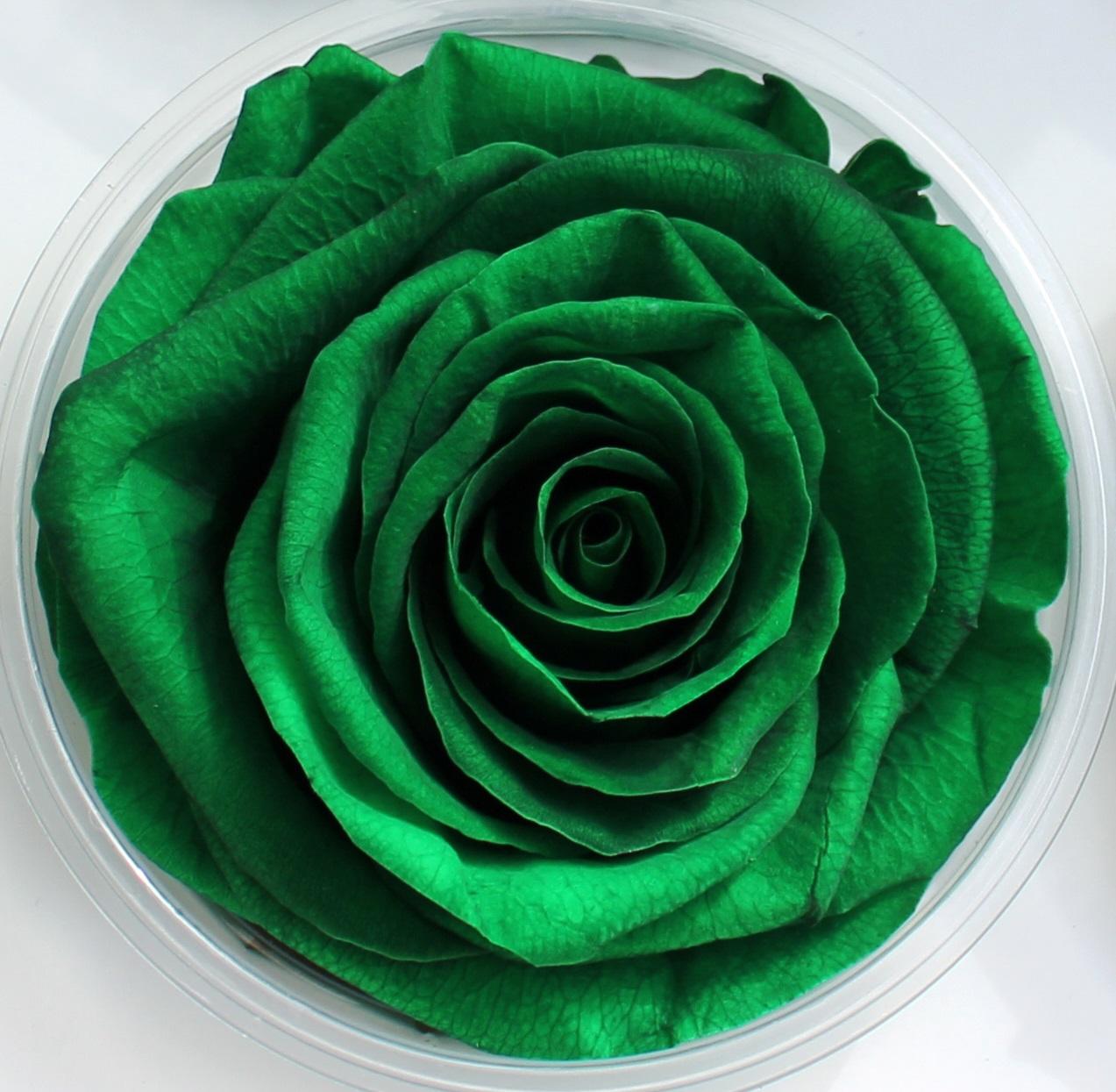 Preserved Roses  Stevens and Son Wholesale Florist