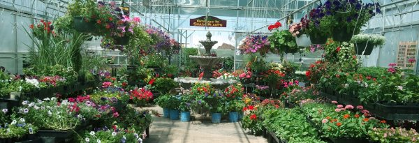 landscaping & garden center shulfer's