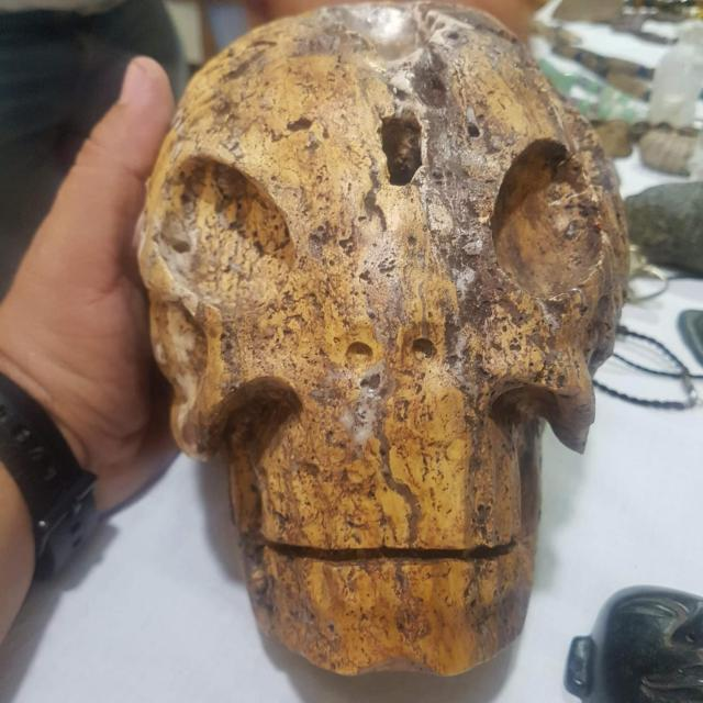 """REPTILIAN MINERALIZED SKULL"",DIG WAS FILMED- NOTE THE MOUTH AND EYE SOCKETS-SOME OF THE ARTIFACTS IN THIS SPECIFIC AREA DATE BACK TO 7,000 B.C.- MIND BLOWING PIX WILL BE SHOWN AT BRANSON - gensix.com"